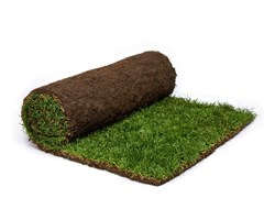 rolawn-medallion-turf-1m-roll-choose-your-amount-p1042-45003 image
